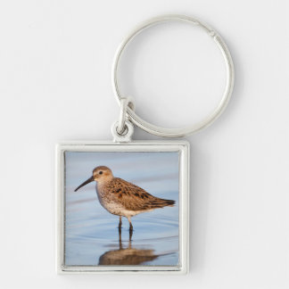 Galveston County, Texas. Dunlin Silver-Colored Square Keychain