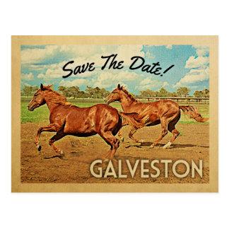 Galveston Texas Save The Date Horses Postcard