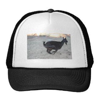 Gama alpina negra de la cabra que corre lejos a la gorros bordados