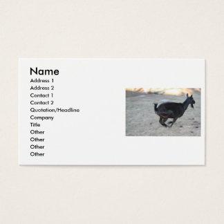 Gama alpina negra de la cabra que corre lejos a la tarjetas de visita