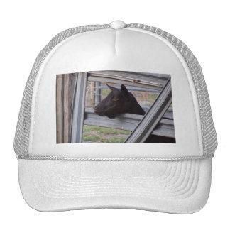 Gama alpina negra de la cabra que espera en la pue gorra