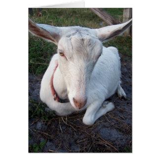 Gama blanca de la cabra de la lechería de Saanen q Tarjeton