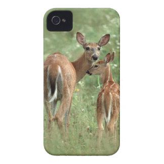 Gama Blanco-Atada con su cervatillo - animales de Case-Mate iPhone 4 Funda