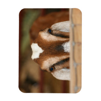 Gama de Nubian que mira a escondidas sobre el carr Imán Flexible