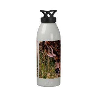 Gama del ciervo mula botellas de beber