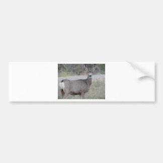 Gama del ciervo mula etiqueta de parachoque
