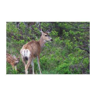 Gama del ciervo mula con el cervatillo 1 impresión de lienzo