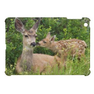 Gama del ciervo mula con el cervatillo 2