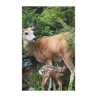 Gama del ciervo mula con el cervatillo recién impresiones en lona