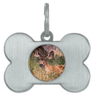 Gama del ciervo mula placa de nombre de mascota