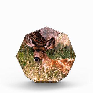 Gama del ciervo mula