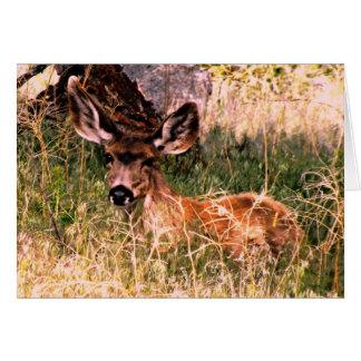 Gama del ciervo mula tarjeta