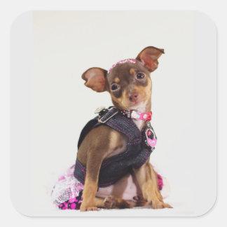 gama del perro de la chihuahua pegatina cuadrada