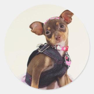 gama del perro de la chihuahua pegatina redonda