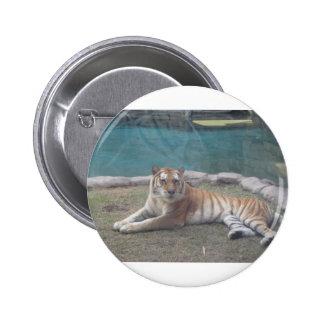 Gama salvaje del tigre de productos pin redondo de 2 pulgadas