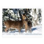 Gama un ciervo tarjetas postales