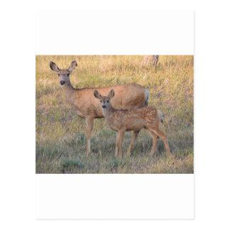 Gama y cervatillo del ciervo mula postal