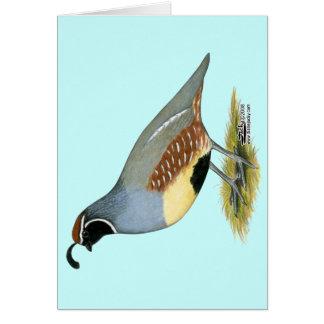 Gambel's Desert Quail Card