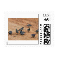Gambel's Quail First Class Postage Stamps