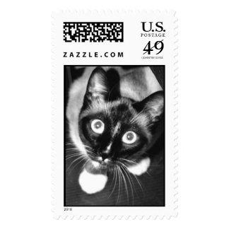gambolbw2.jpg postage stamp
