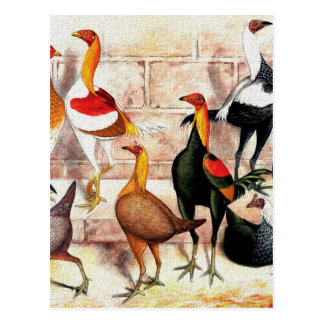 """Game Bantams"" Vintage Illustration Postcard"