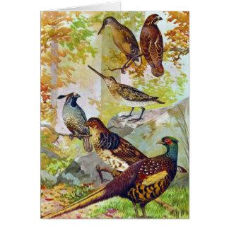 Game Birds 1902 True Stone Chromolithograph Card