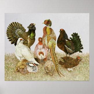 Game Birds Poster