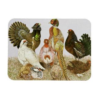 Game Birds Rectangular Photo Magnet