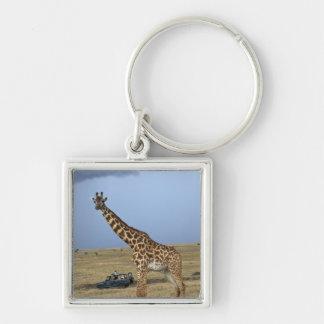 Game drive safari watching Masai Giraffe Keychain