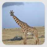 Game drive safari watching Masai Giraffe Square Sticker