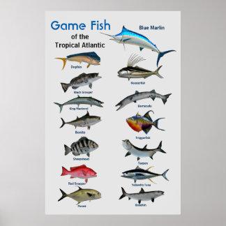 Game fish of Tropical Atlantic Ocean Poster