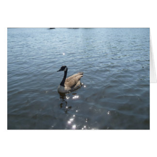 Game goose on a lake card