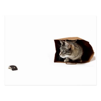 """Game of Cat & """"Mouse"""" Postcard"""