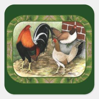 Gamefowl en la granja pegatina cuadrada