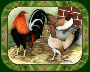Game Fowl Stickers   Zazzle
