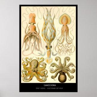 Gamochonia – Plate 54 - Kunstformen der Natur Poster