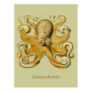 Gamochonia Vertical Postcard