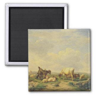 Ganadero y manada, c.1880 imán cuadrado