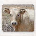 Ganado blanco de Charolais de los ojos grandes - o Tapetes De Raton