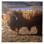 Ganado Bull, Escocia de la montaña Azulejo Ceramica
