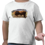 Ganado Bull, Escocia de la montaña Camisetas