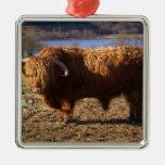 Ganado Bull, Escocia de la montaña Ornamento De Reyes Magos