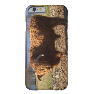 Ganado Bull, Escocia de la montaña Funda De iPhone 6 Barely There