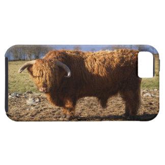 Ganado Bull, Escocia de la montaña iPhone 5 Carcasa