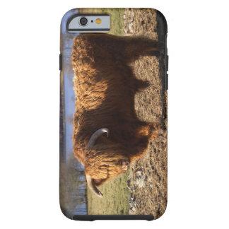 Ganado Bull, Escocia de la montaña Funda Para iPhone 6 Tough