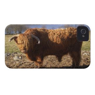 Ganado Bull, Escocia de la montaña iPhone 4 Cárcasa