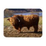 Ganado Bull, Escocia de la montaña Iman Flexible