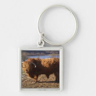 Ganado Bull, Escocia de la montaña Llavero Cuadrado Plateado