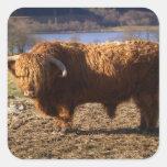 Ganado Bull, Escocia de la montaña Calcomanía Cuadradas Personalizadas
