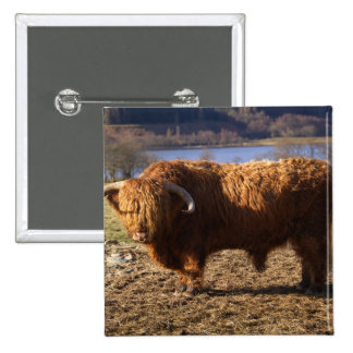 Ganado Bull, Escocia de la montaña Pin Cuadrada 5 Cm